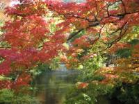また行きたい!!秋を感じるおすすめの癒し旅特集~北部九州の旅館編~