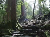 まだ見ぬ景色を求めて、今こそ、お得で楽しい熊本旅へ