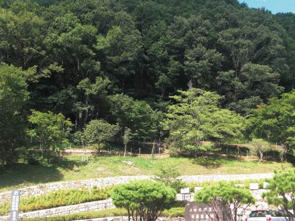生きた証が森になる、ドイツ型の樹木葬。