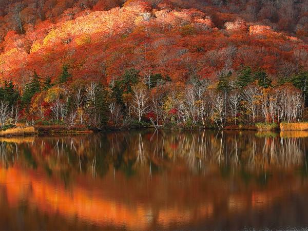 外に出ないと、「東北の秋」がもったいない。